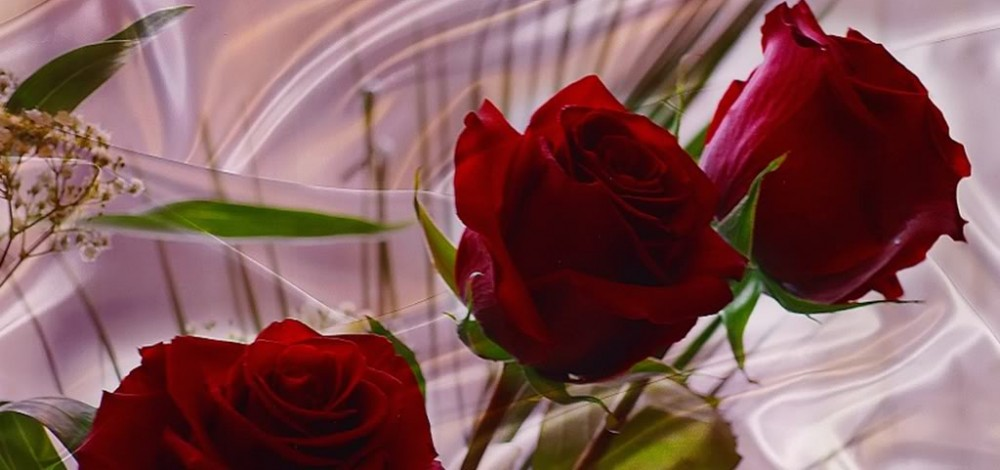 401111-1024x768-red-roses