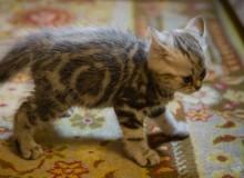cats_cats_07