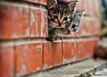 cats_cats_10