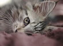 cats_cats_11
