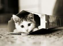 cats_cats_12