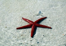 sea-star-b