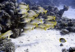 under-water-b