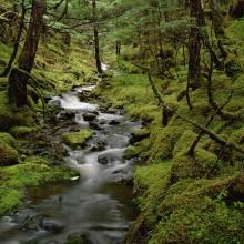 Temperate Rainforest, Cordova, Alaska