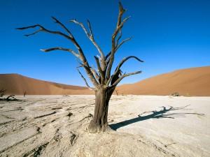 Namib-Naukluft Park, Namib Desert, Namibia, Africa